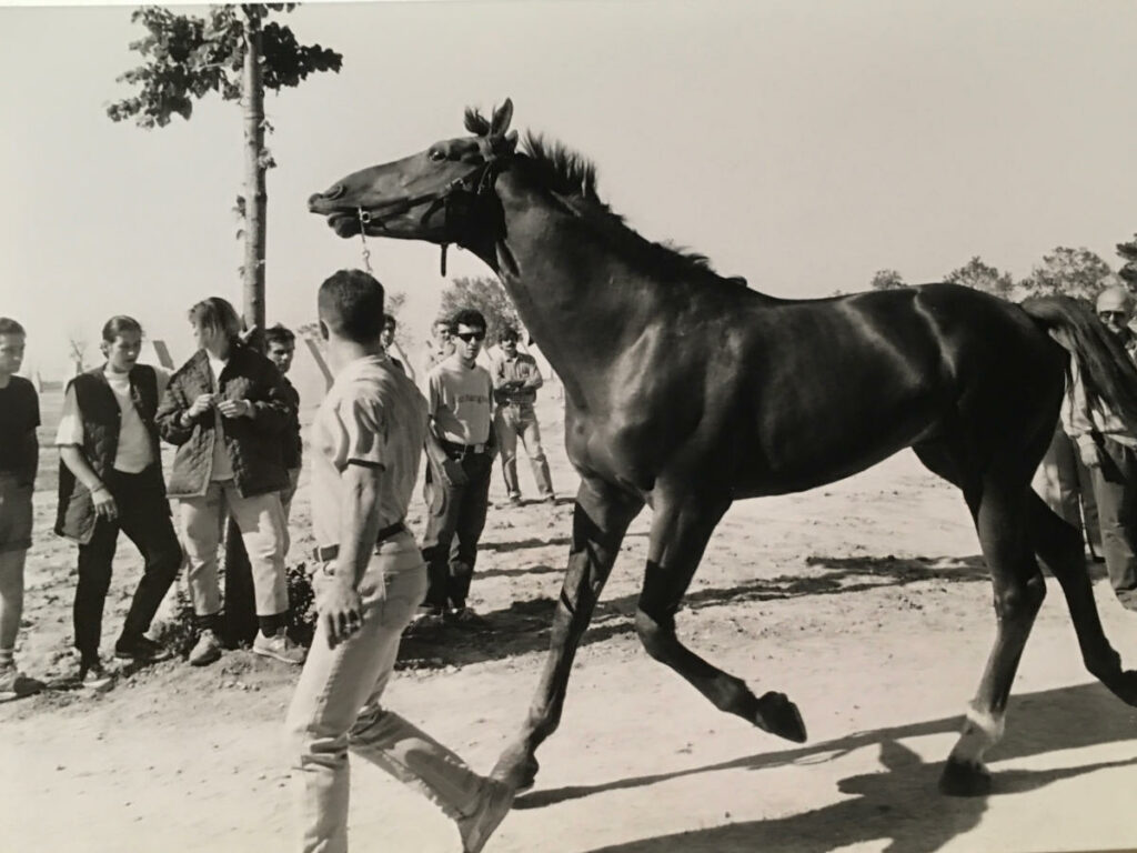 Vincenzo Muccioli - Allevamento di cavalli da corsa a SanPa